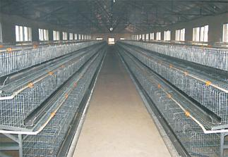 Poultry battery cages for sale in uk zithromax