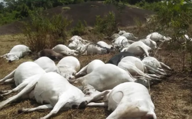 Ondo Police Speaks On Death Of Over Thirty Cows