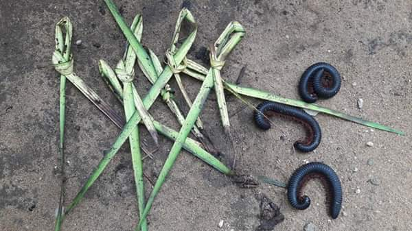 Millipedes Sent To The House Of An Alleged Thief In Uyo Using Juju