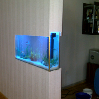 Aquarium for sale at a give away price picture inclusive for Aquariums for sale near me
