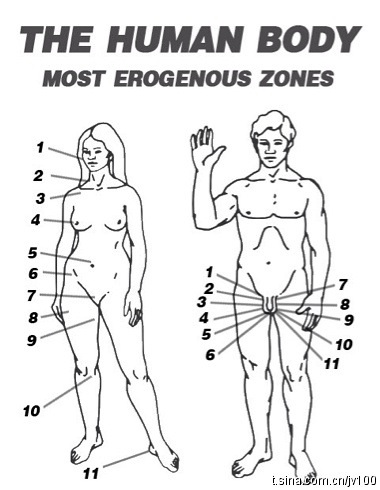 What are the 7 erogenous zones of a woman
