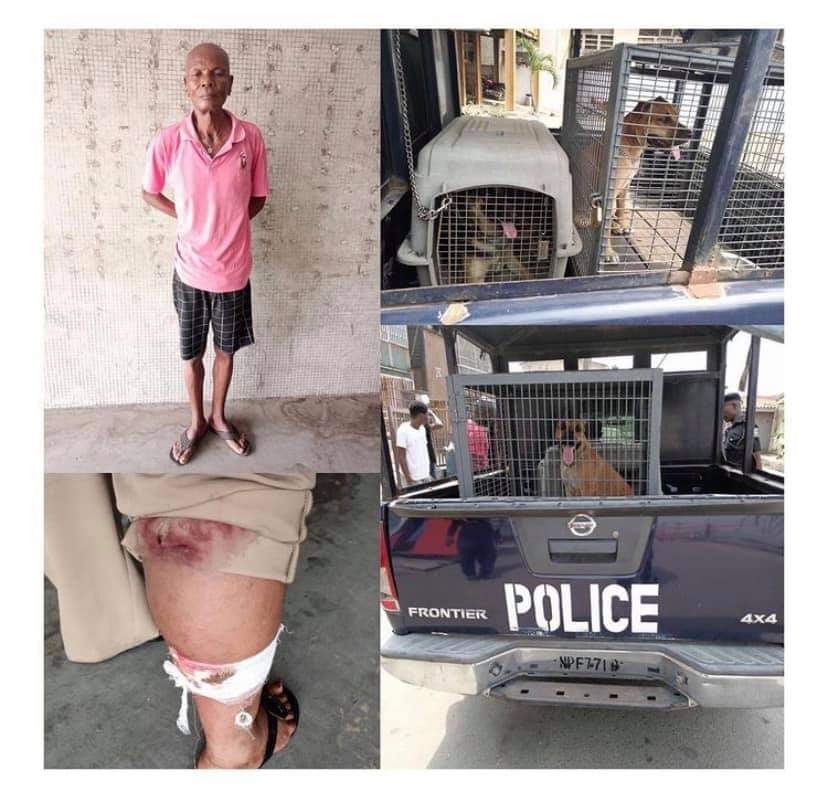 Man unleashes his dogs on Policewoman during an operation