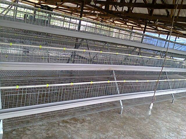 Poultry Full Automated Cages For Sales Adverts 1 Nigeria