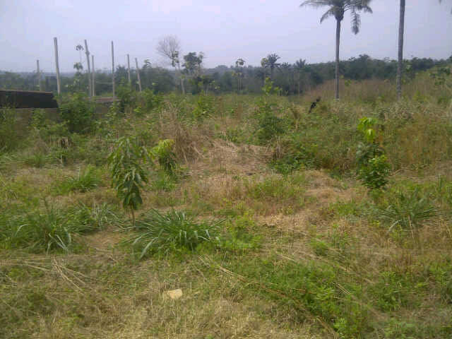 Image result for farm lands in egbeda in ibadan