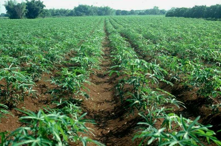 Image result for A farm land in ibadan