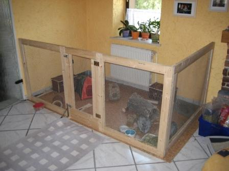 Interesting facts about rabbits oryctolagus cuniculus for Diy playpen for guinea pigs