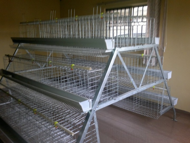 Poultry Battery Cages For Sale In Nigeria Agriculture