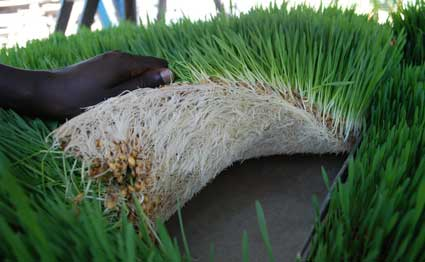 How to make money with soil less farming agriculture for Soil less farming