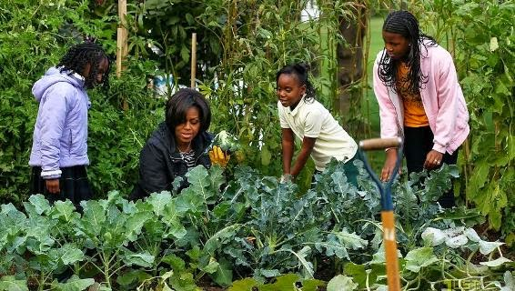Obama 39 S Wife Start Garden In White House Usa 1st Lady Celebrities Nigeria