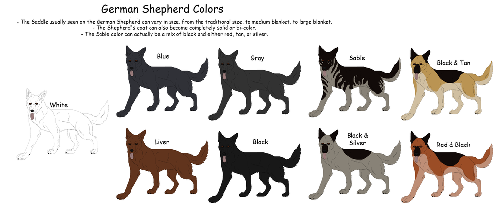 How To Identify A Pure GSD For A Newbies  Pets  Nigeria