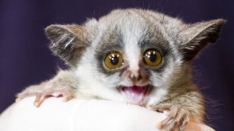 ...on The Existence Of Bush Babies - Education - Nigeria