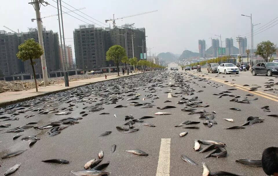 It Rained Fish In Thailand. Must See. Pictures - Foreign ...