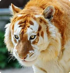 10 Incredible Hybrid Animals You Wouldn't Believe Exist ...