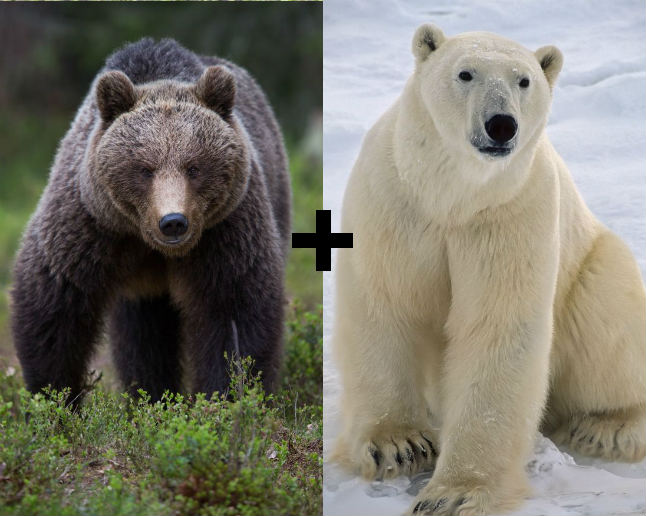 10 Incredible Hybrid Animals Wouldnt