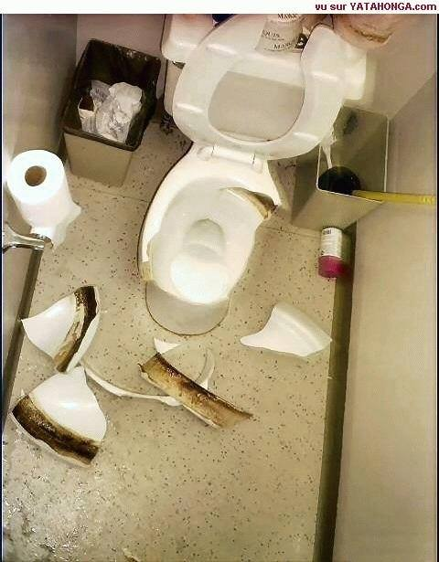 Bad Toilet Habits Such As This Could Be Dangerous With