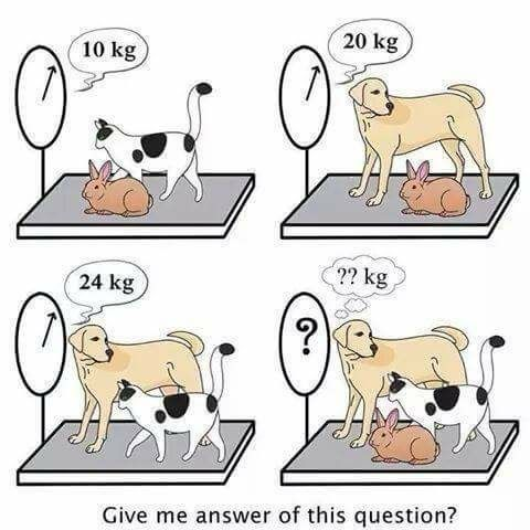 Image result for iq question