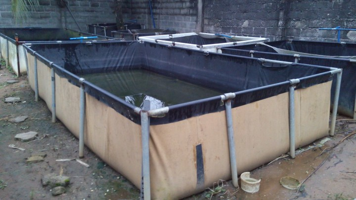 Mobile fish pond for sale adverts nigeria for Garden pond fish for sale