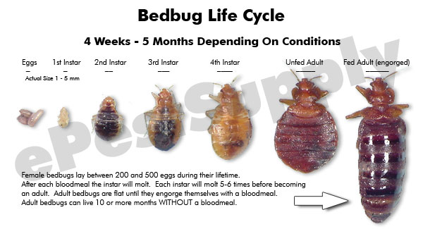 Don T Let The Bed Bugs Bite Health Nigeria