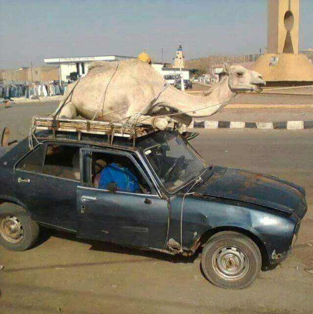 hilarious pic: see what this old peugeot 504 was carrying - travel