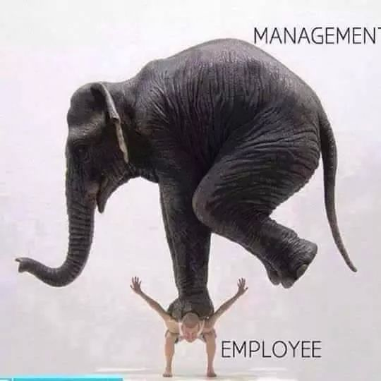 Image result for The Management funny