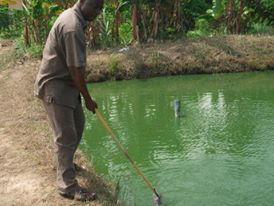 Tilapia investment opportunities in ghana africa syndicate in investment banking