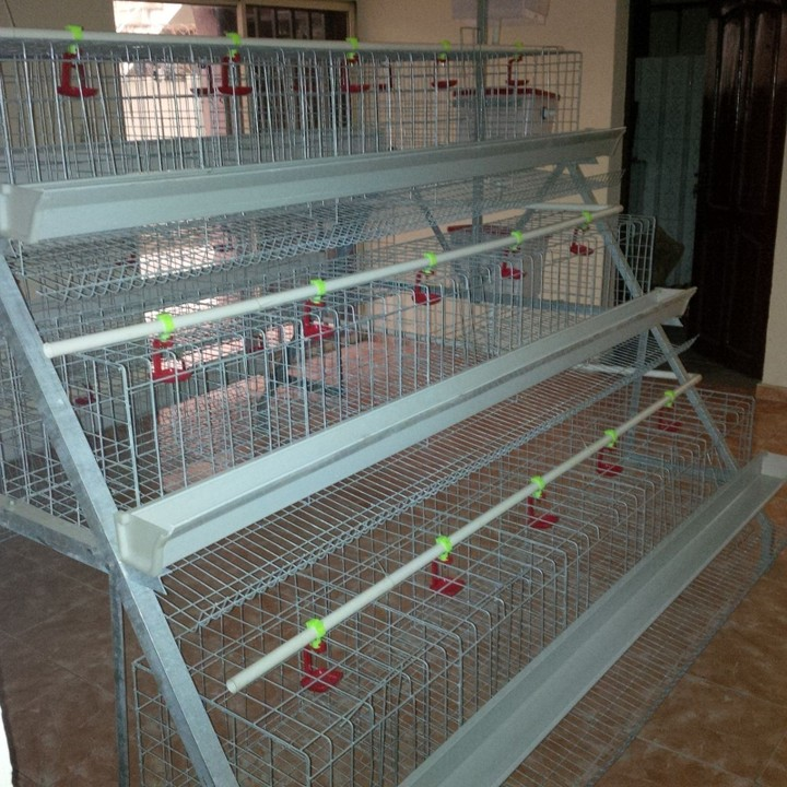 Battery Cages/Poultry Cages For Sale In Nigeria