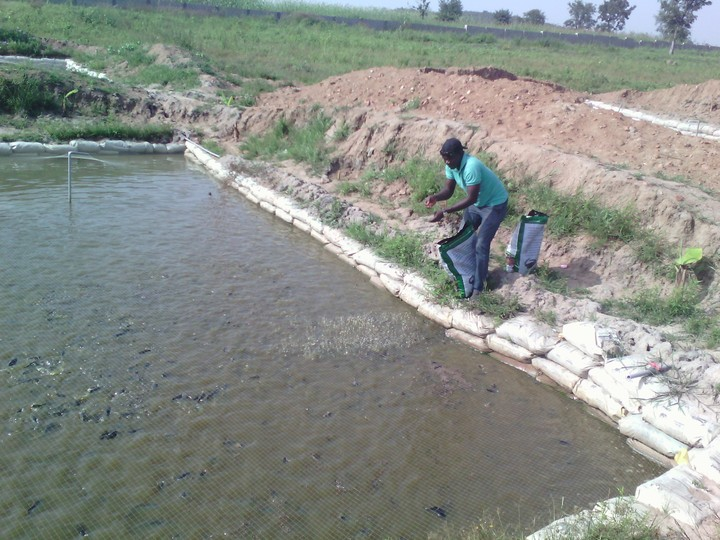 Earthen pond construction fish pond pics agriculture for Small pond construction