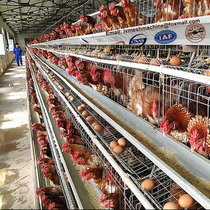 Become Multimillionaire By Invest Your Money On Poultry