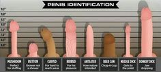 different dick shapes