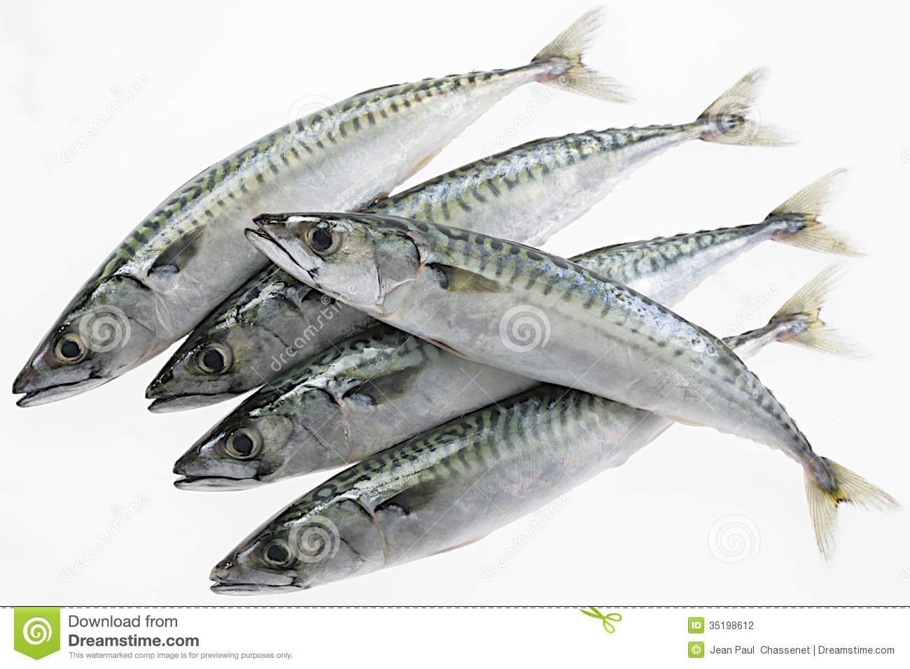 List of the most commom imported fishes in lagos pictures for 7 fishes list