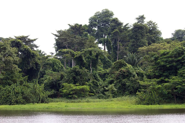 Image result for iita forest reserve