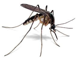 Small Animals And Insects That Cause Big And Deadly Diseases