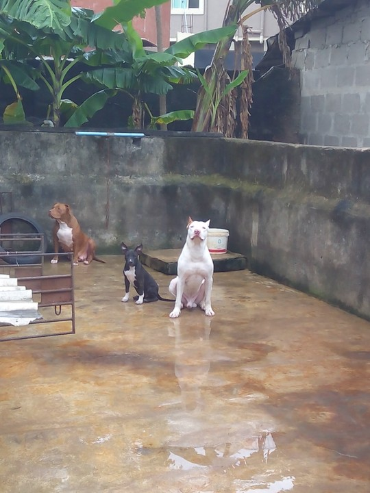 Game Bred Kennels