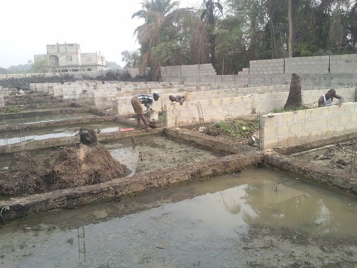 Fish Pond Construction In Nigeria Agriculture Nigeria