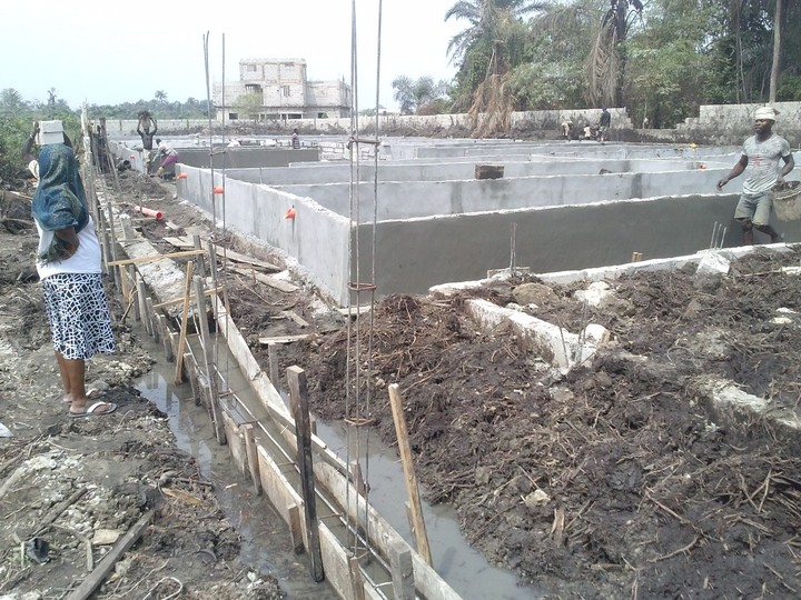 Fish pond construction in nigeria agriculture nigeria for Fish pond design in nigeria