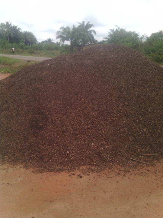 We Need Buyers For Palm Kernel SHELL and Palm Kernel CHARCOAL