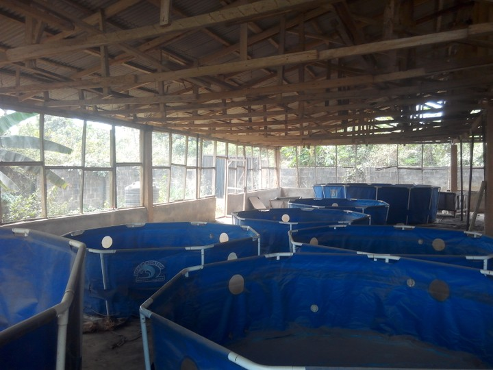Fish ponds for sale agriculture nigeria for Used koi pond for sale