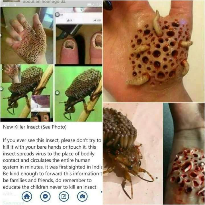 New Killer Insect Found In Indian Pets Nigeria
