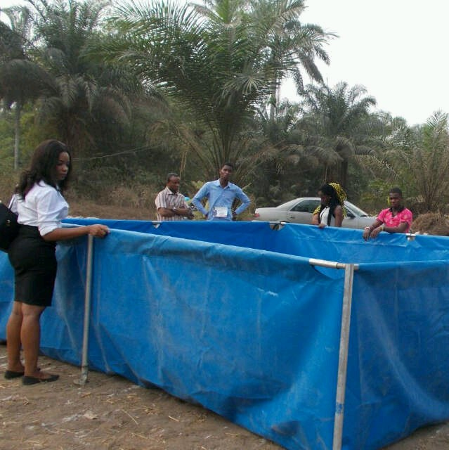 Fast growing fingerings and juveniles and cheap mobile for Tarpaulin fish pond