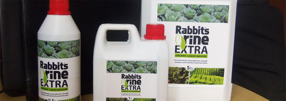 Rabbit Farming And Value Addition - Agriculture - Nigeria