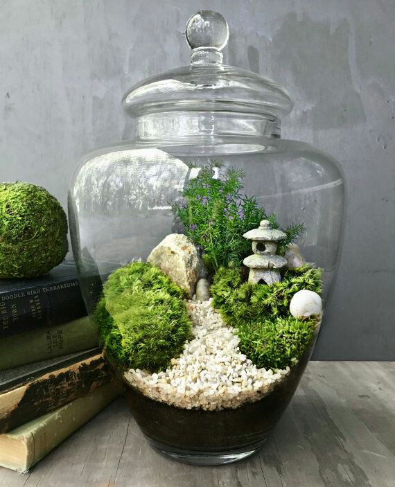 The Science Of Nature Building A Terrarium Science Technology