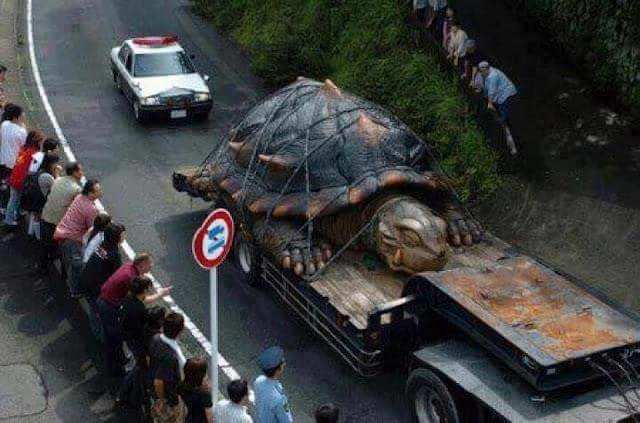 Photo Of The World Largest Tortoise Found In Amazon River - World largest river in the world