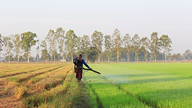 rice farming utilizing powergrow organic foliar