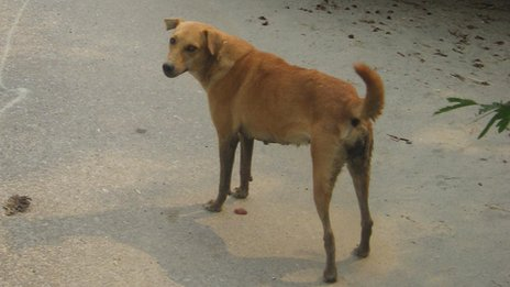 But Is Bingo The Only Nigeria Breed Of Dog Pix Pets
