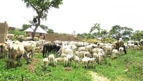 South-South And South-East Lawmakers Oppose Grazing Bill
