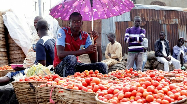 Tomato Price Crashes From N25,000 To N800 Per Basket