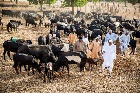 President Buhari To Rehabilitate 414 Grazing Reserve Centres Nationwide