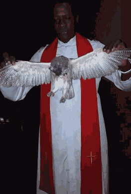 Witch Turns To Owl At Enugu Crusade, Falls And Dies - Eyewitness Claims