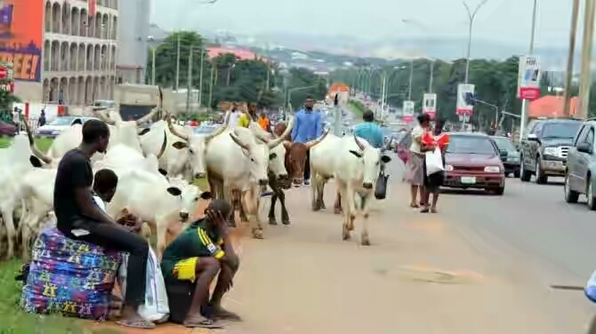 """""""Slaughter Any Cow Found In The Capital City"""" – Senate Committee On FCT"""