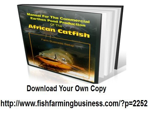 how to start a catfish farming business